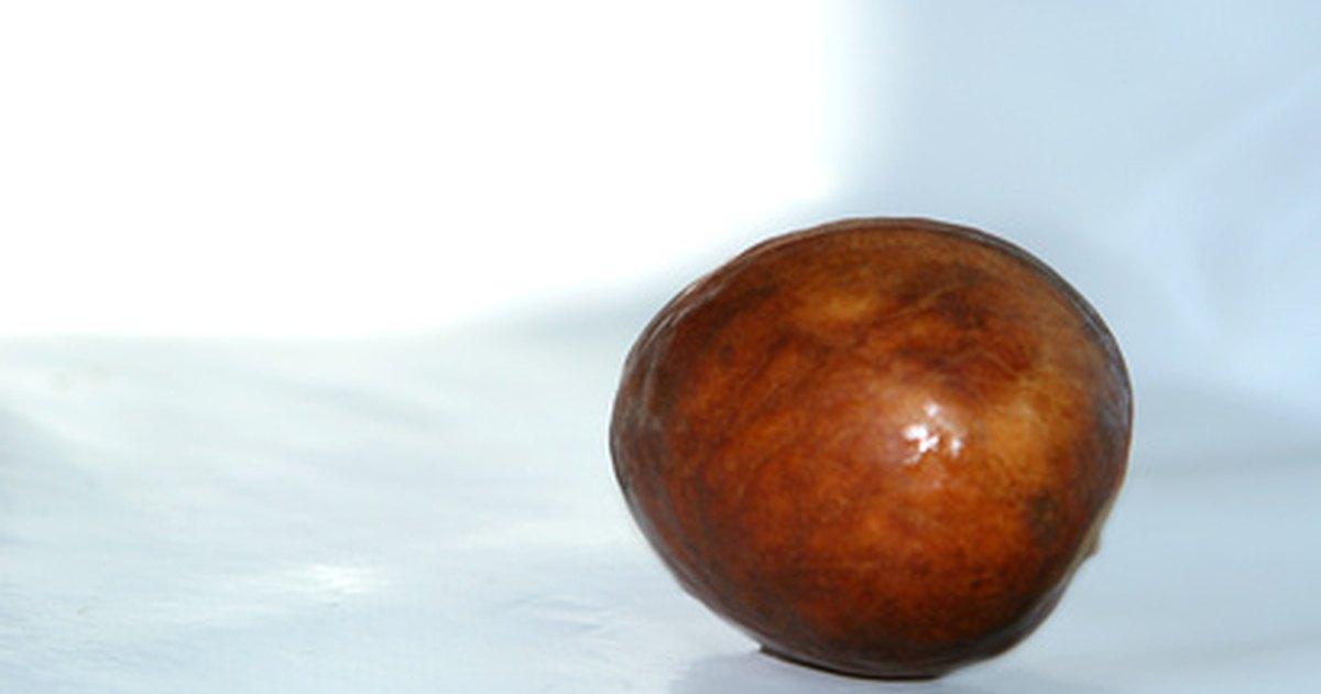 health benefits of avocado seed