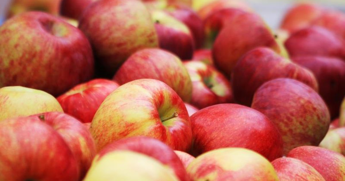 Do Apples Help You Lose Weight? | LIVESTRONG.COM