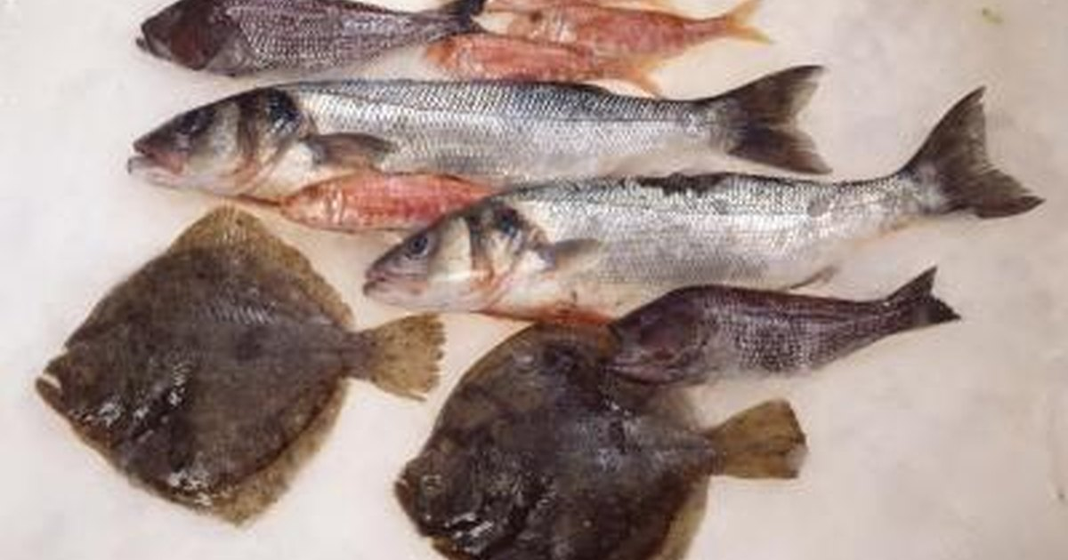 How to cook fish whiting fillets livestrong com for How to make fish fillet