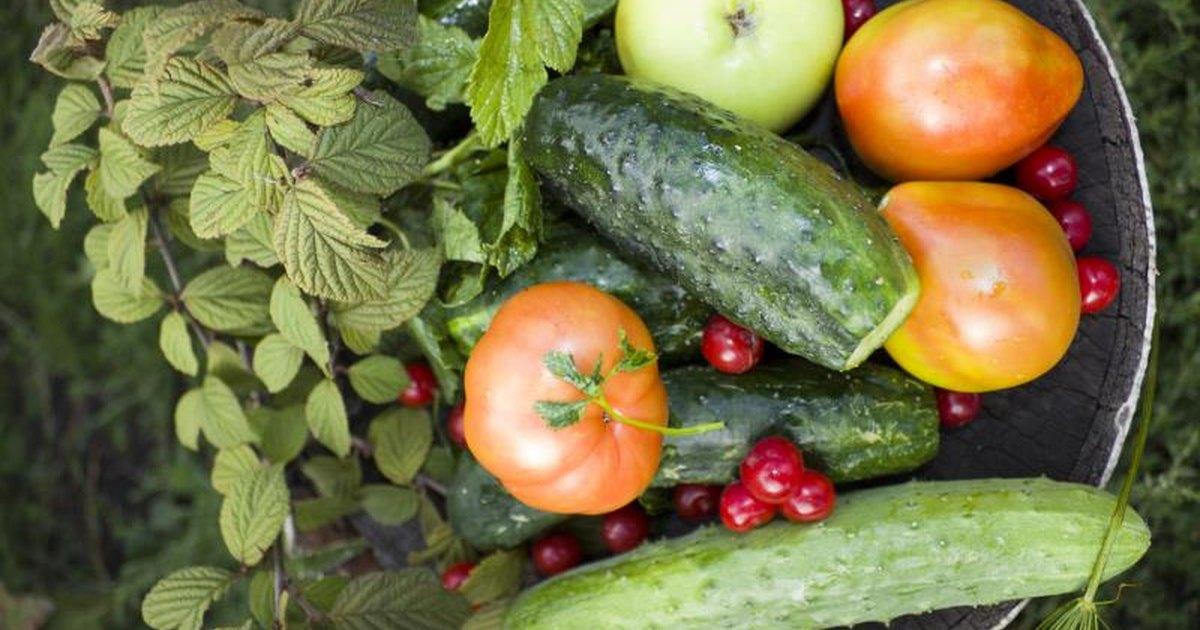 Arguments vegetarianism essay
