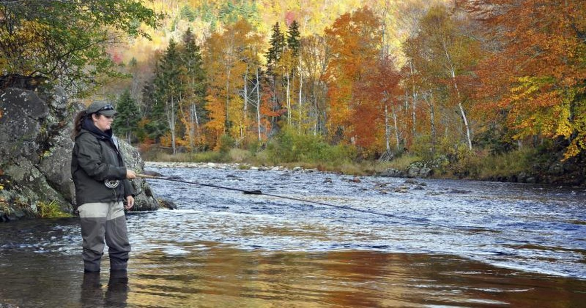 When to fish for salmon in michigan livestrong com for Michigan fish size limits