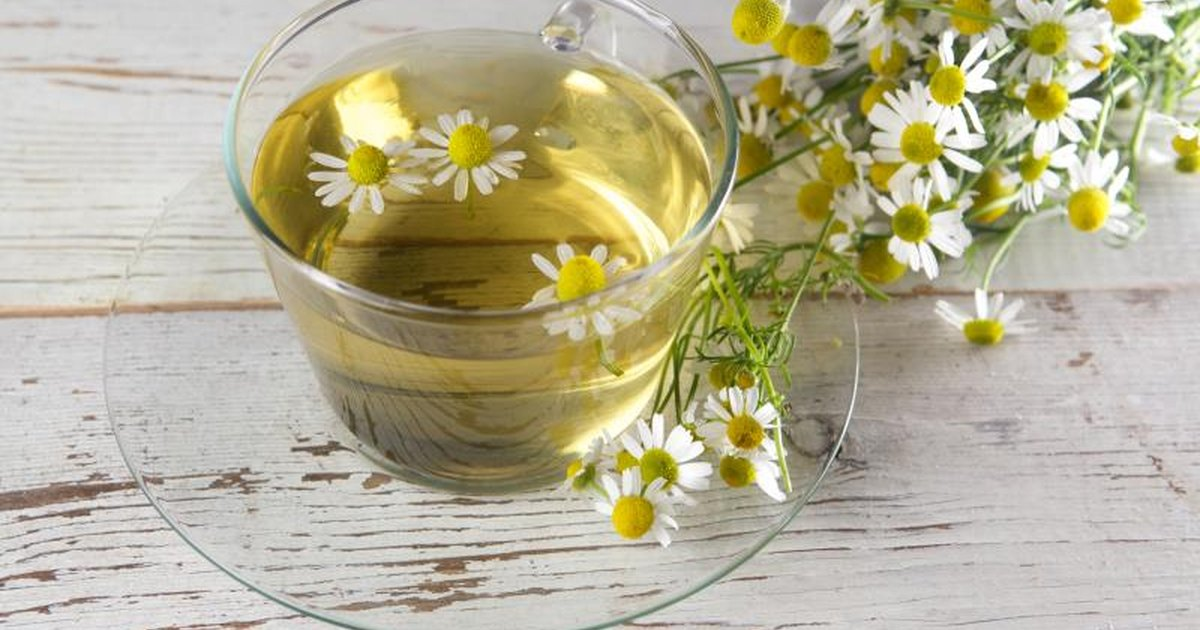 chamomile tea essay Chamomile tea there's a reason chamomile has been used for ages to help insomnia — because it increases glycine, which relaxes the body and is a sleep-inducer and sipping on a cup of chamomile.