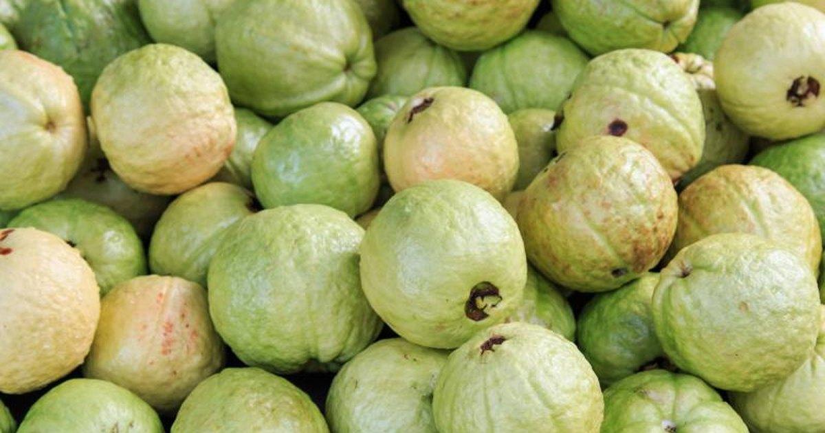 guayaba fruit what fruit is healthy