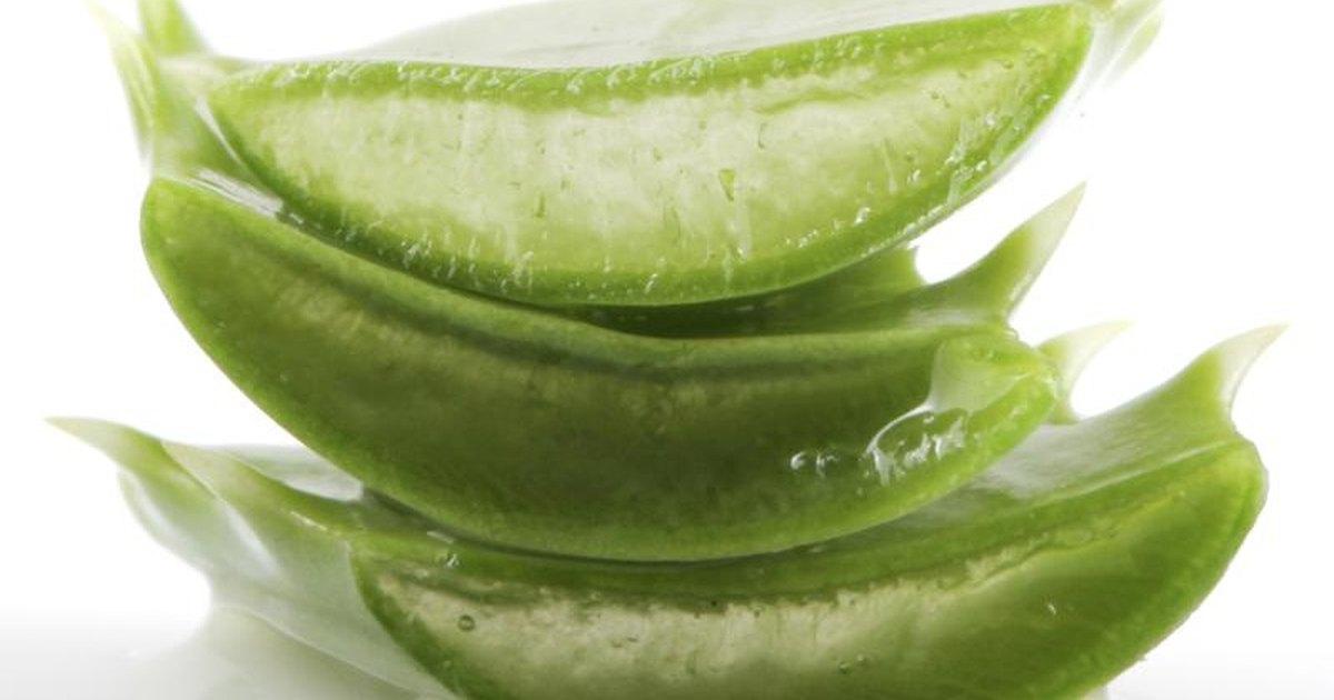 aloe-plant