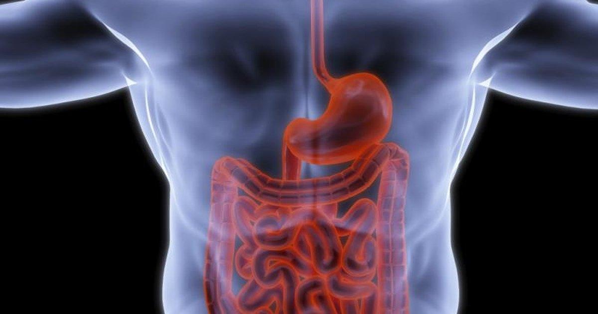 intestinal peristalsis  u0026 magnesium