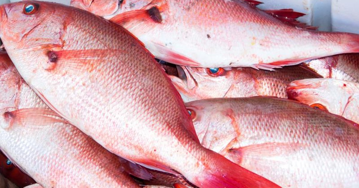 How to bake simple red snapper livestrong com for Red snapper fishing