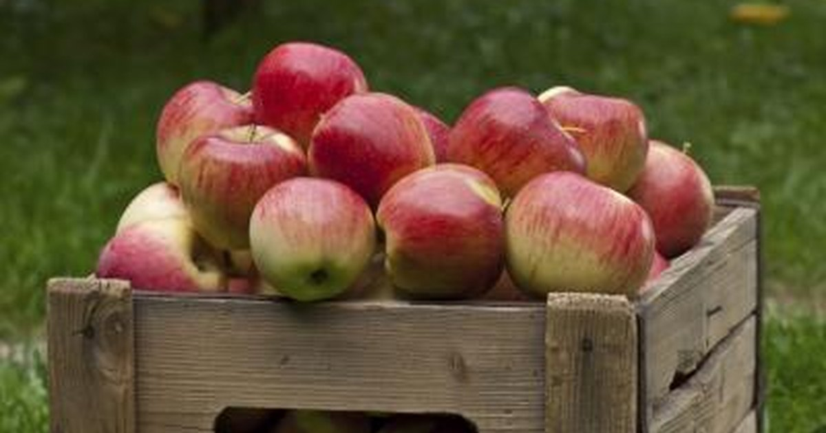 The Carb Count in Apples | LIVESTRONG.COM