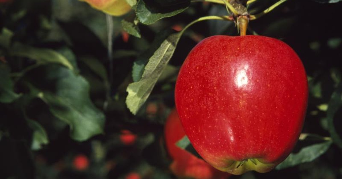 How Much Sodium Is in an Apple? | LIVESTRONG.COM