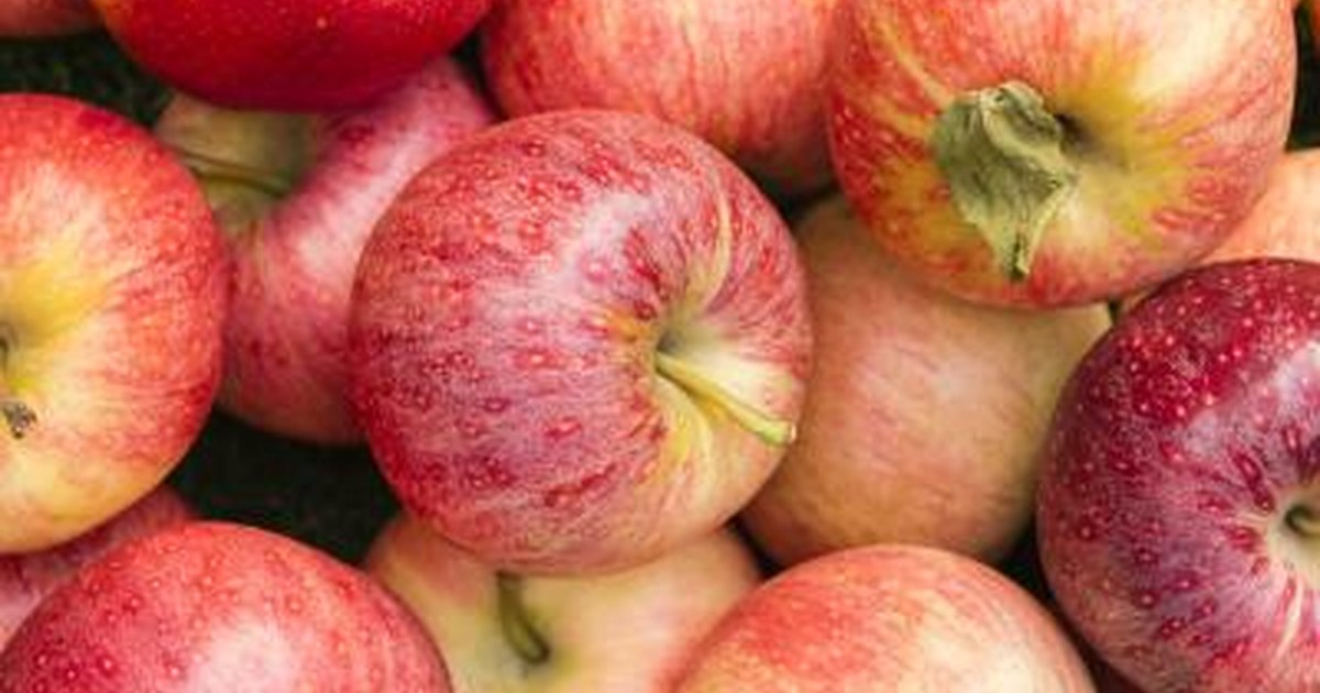 How Many Calories in a Gala Apple? | LIVESTRONG.COM