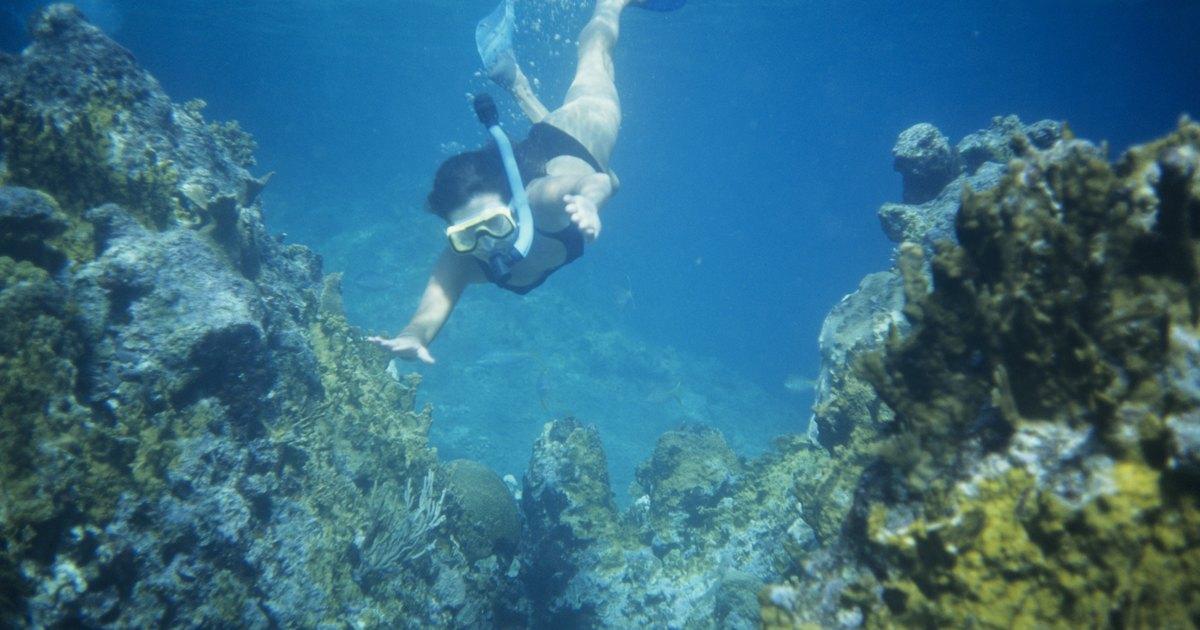 Snorkeling Ft Myers Beach Florida