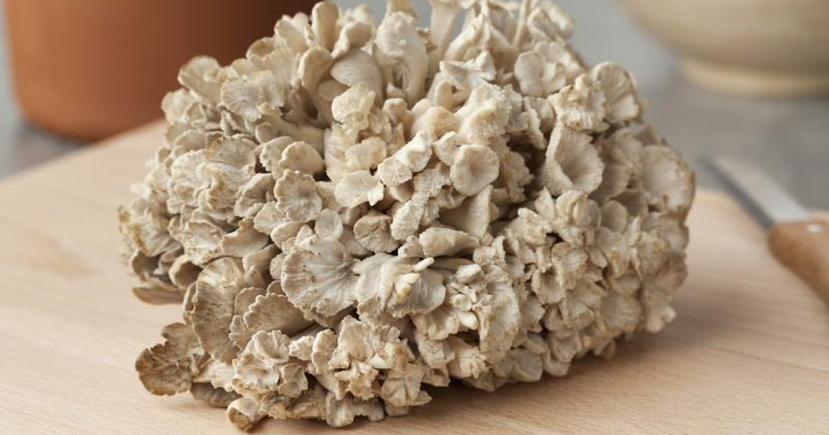 Where to buy maitake mushroom