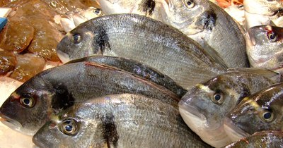 Comparison of Omega 3 in Herring and Salmon