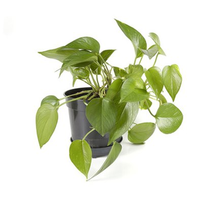 Plants & Herbs That Grow Well in an Indoor Office