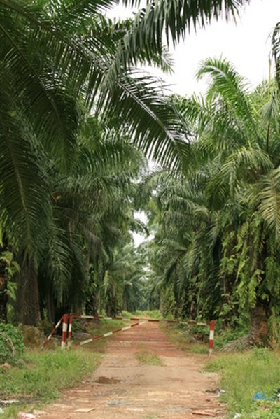 Health Effects of Palm Oil in the Diet