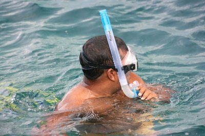 Snorkeling in Marco Island, Florida