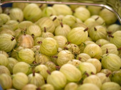 What Are the Benefits of Amla Murabba?