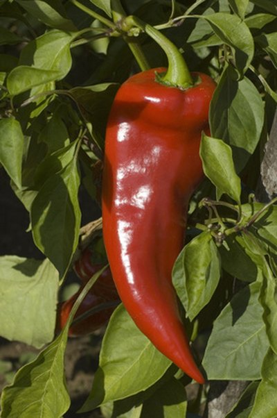 Why Is Cayenne Pepper Good for You?