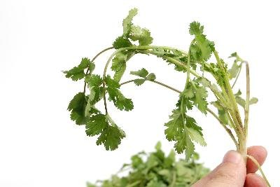 Cilantro Health Facts
