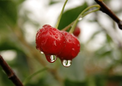 The Benefits of Surinam Cherry Fruit