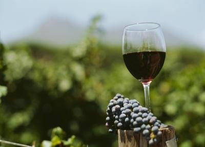 The Best Red Wine for Your Health