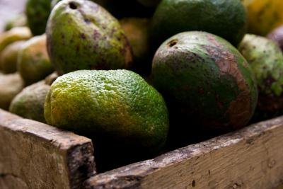 The Avocado Oil Diet