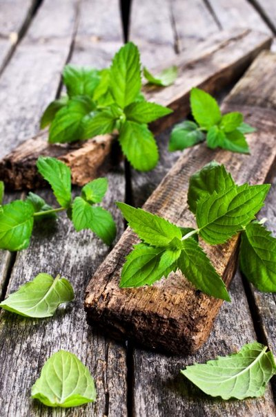 Rheumatoid Arthritis and Peppermint Essential Oils