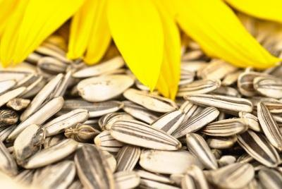 The Sunflower Seed Diet