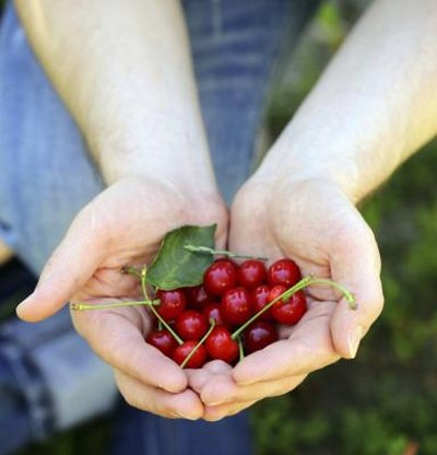 How Many Calories Are in a Handful of Fresh Cherries?