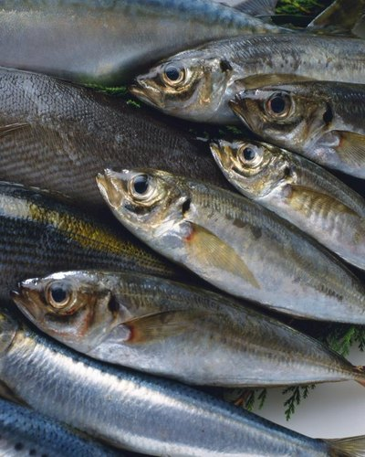 Nutrition of Salmon Vs. Mackerel