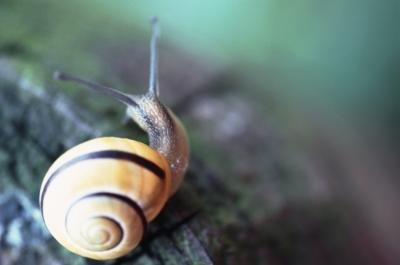 Snail Cream Benefits