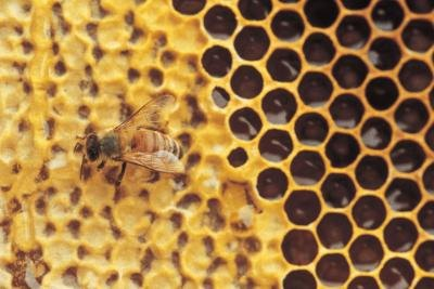 Is Royal Jelly Good for Men?
