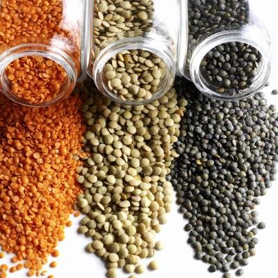 The Nutritional Value of Sprouted Lentils