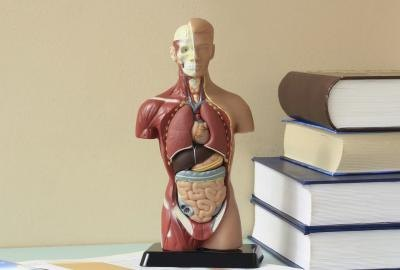 List of Body Systems