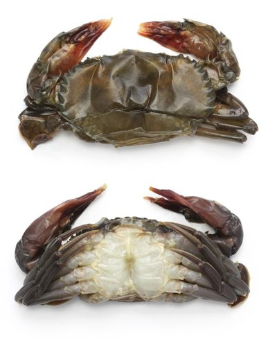 The Calories in Soft Shell Crab