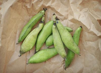 What Are the Benefits of Fava Beans?