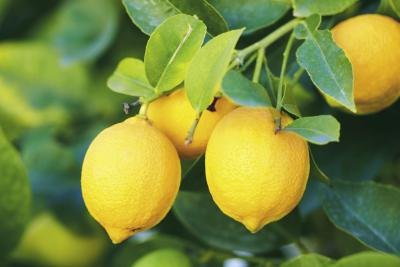 The Benefits of Lemons on Blood Sugar