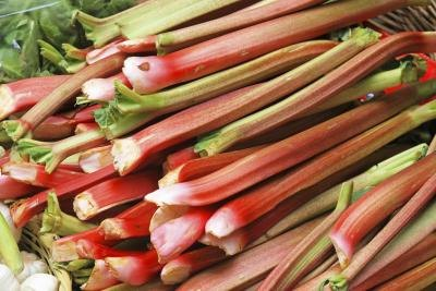 Side Effects of Rhubarb