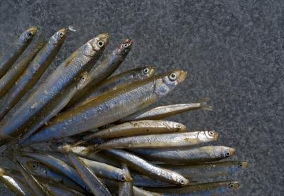 What Are the Health Benefits of Smelt?