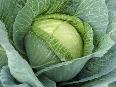 What Vitamins Are in Cabbage?