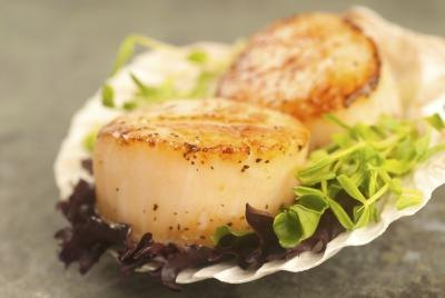 Are Sea Scallops Healthy?