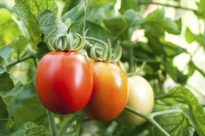 What Type of Acid Is in Tomatoes?
