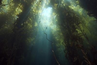 What Are the Benefits of Kelp Powder?