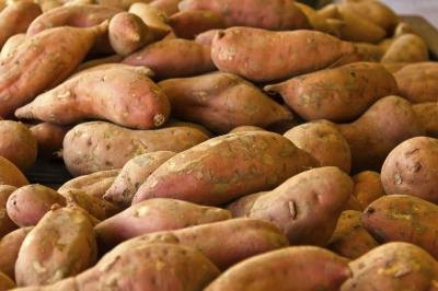 Are Sweet Potatoes an Anti-Cancer Food?