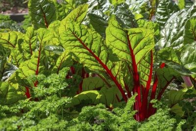 Green Leafy Vegetables High in Potassium