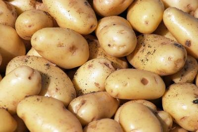Does Nuking a Potato Kill Enzymes or Nutrients?