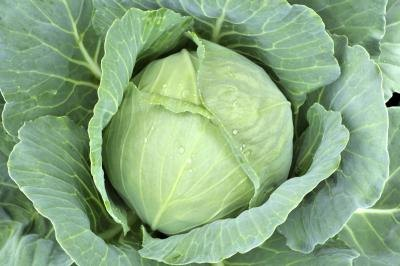 How Raw Cabbage Affects Your Thyroid