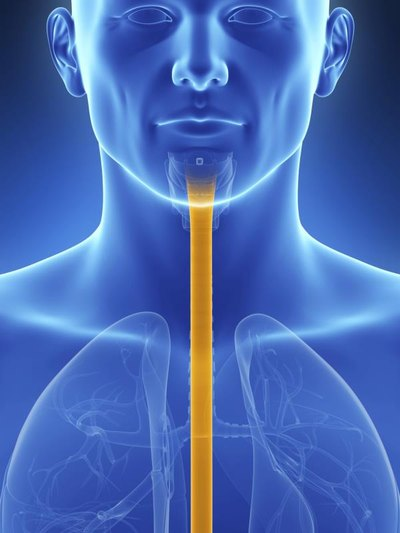 Ways to Strengthen the Esophagus Muscle