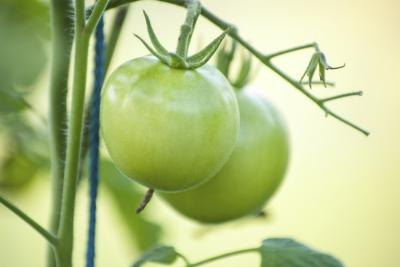 What Are the Benefits of Green Tomatoes?