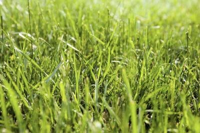 Is Regular Grass Healthy to Eat?