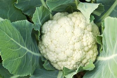 Can Cauliflower Cause Stomachaches?